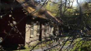 Eesti kogukondade liit ootab asjalikke liikmeid